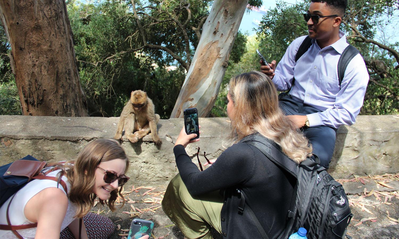 Kogod students taking photos of a monkey in Panama